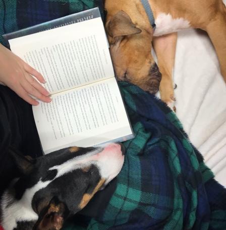 Lovabull Bull Terrier Books