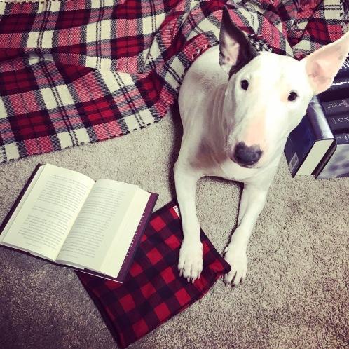 Lovabull Bull Terrier Ruca